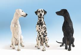 dog_breeding_2.jpg
