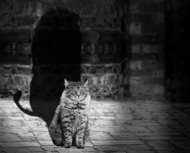 cat_564202_640.jpg