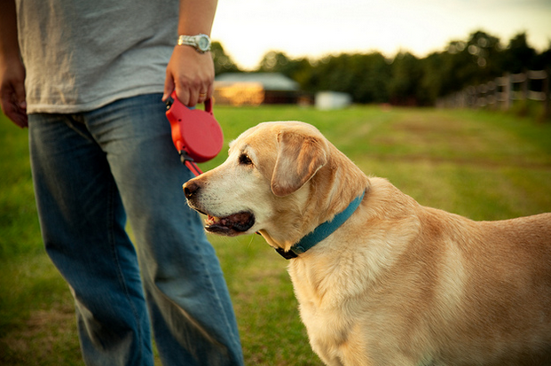 5 things dogs teach us about leadership