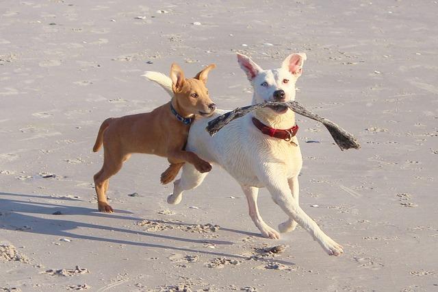 dogs_578090_640.jpg