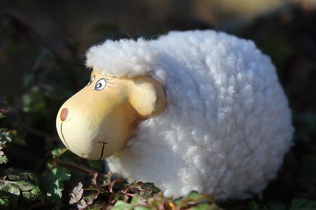 sheep_285156_640.jpg