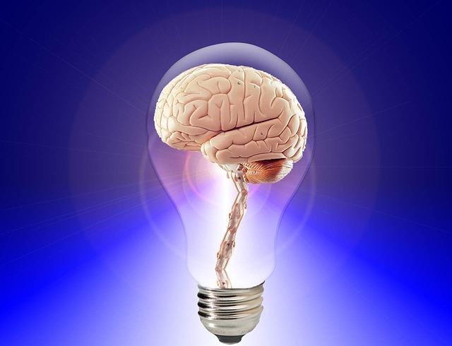 brain_20424_640.jpg
