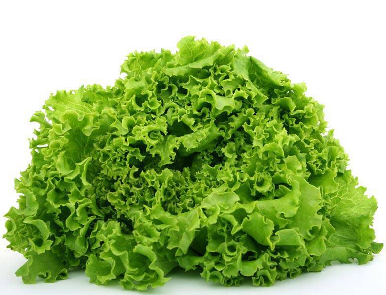lettuce on white
