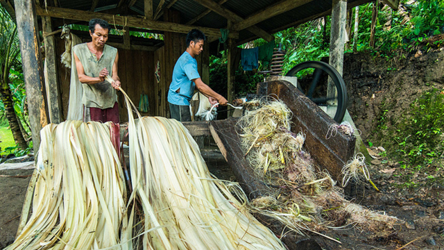 the abaca industry The guardian - back to home make a contribution subscribe  the government has put its weight behind the abacá industry and is currently seeking certification from the rainforest alliance to.