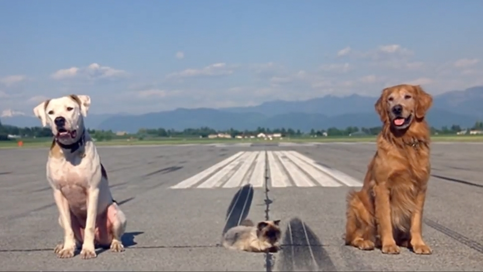 How to Travel via Airplane with Your Pet | Esquire Ph