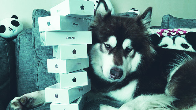 Son Of China's Richest Man Bought 8 iPhone 7s...For His Dog