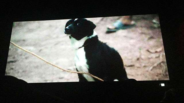 The Lowdown On The Dog Slaughter Scene In 'Oro'