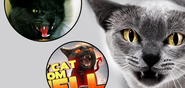 10 Cats From Hell We Never Want To Pet