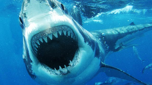 Swimming With Sharks And What's Wrong With Shark Movies, According To Shark Week Showrunner Jeff Kurr