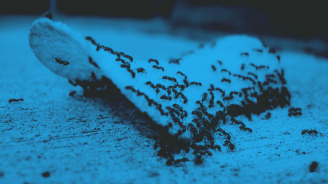 7 Easy Ways To Keep Ants Off Your Food