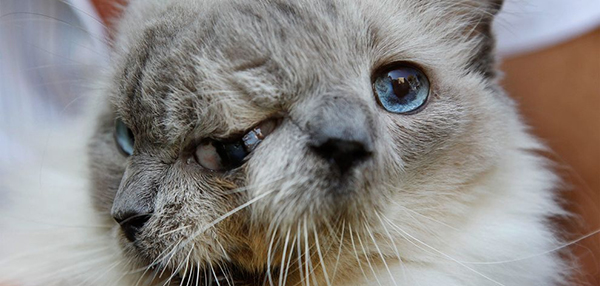 Whoa! News: A Rare Genetic Condition Transformed This 15-Year-Old Cat Into A Real-Life Two-Face