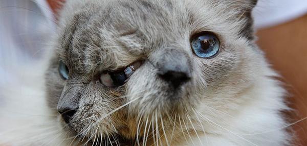 getting kitten neutered