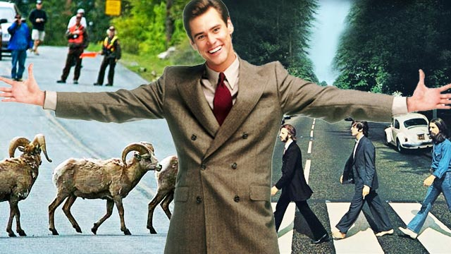 8 Things You Need To Be An Expert Jaywalker