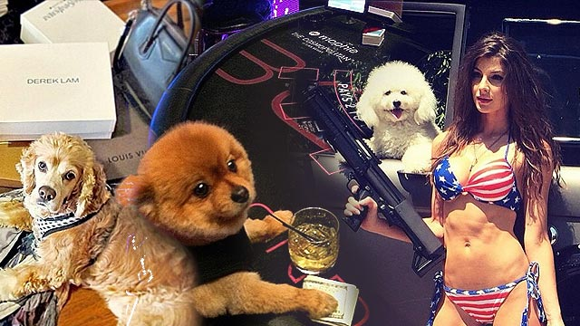 LOOK: These 25 Dogs Are Richer Than You