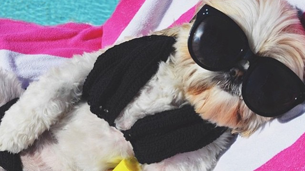 These Well-Dressed Dogs Are Richer Than You