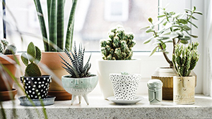 5 Ways To Decorate Your Home With Plants