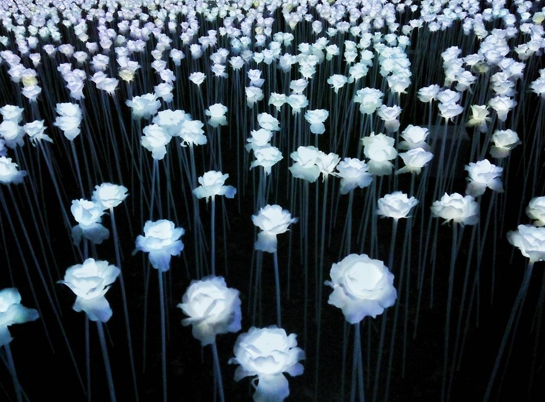 You Have To See This Field Of Led Roses In Cebu Preview