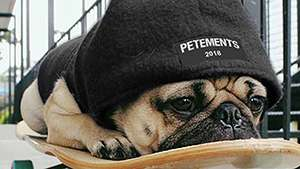 This Brand Will Turn Your Pet Into A Street Style Star