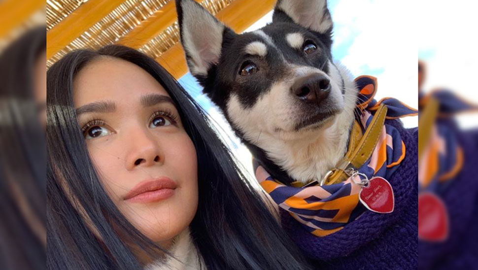 Heart Evangelista's Dog Panda Is Living a Fabulous Life and Here's Proof