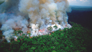 The World's Largest Rainforest Is On Fire And Here's Why We're Alarmed