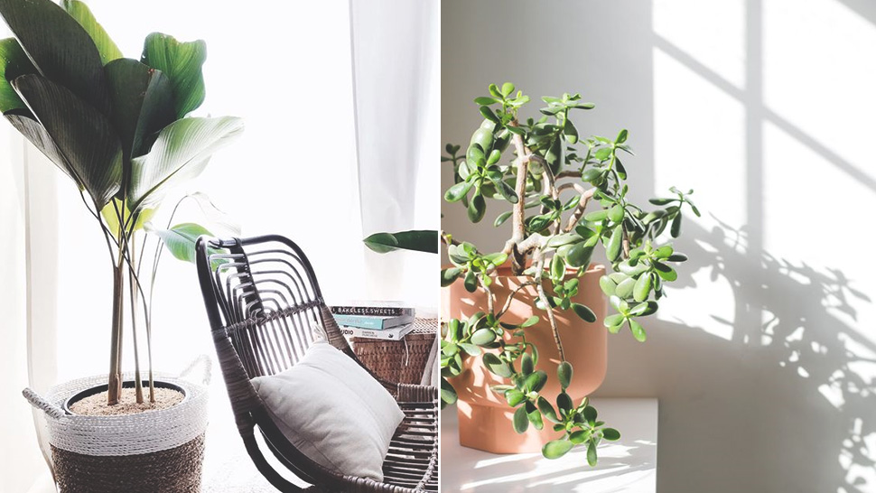 10 Low Maintenance Houseplants Your Friends Can't Possibly Kill