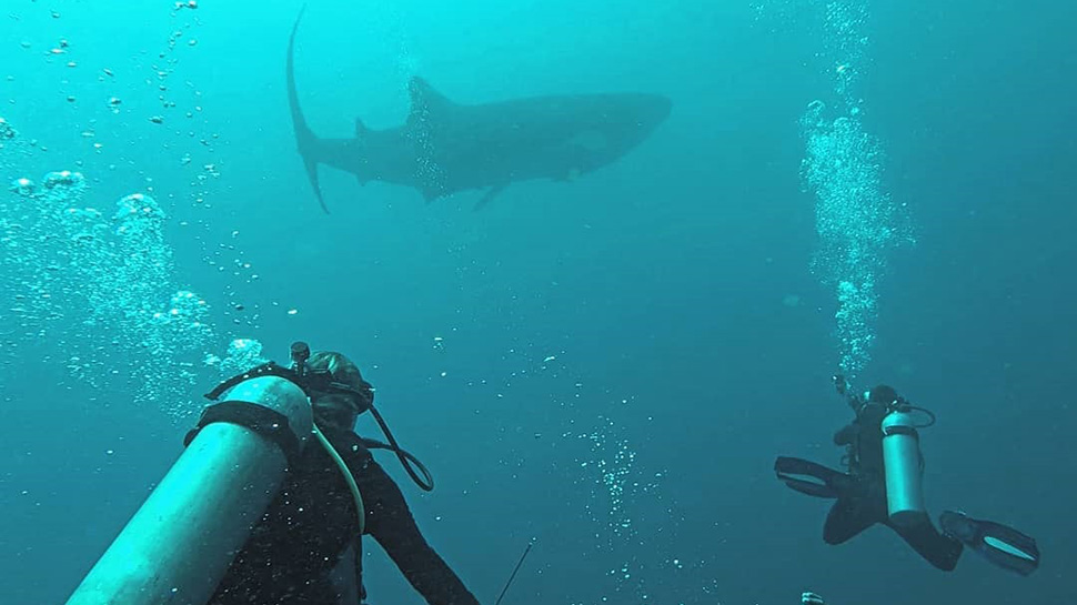 The 5 Best Locations for Scuba Diving in the Philippines