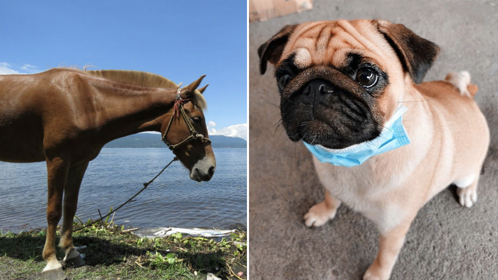 This Is How You Can Help The Animals Near Taal Volcano