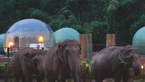 This Resort Offers A Stay Inside Transparent Bubbles Surrounded By Elephants