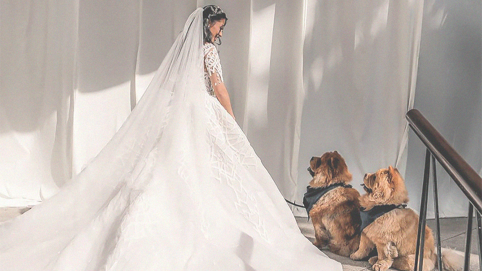 This Couple Flew Their Dogs From The U.s. For Their Wedding Day