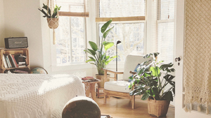 Study Shows Having A Plant On Your Desk May Reduce Workplace Stress
