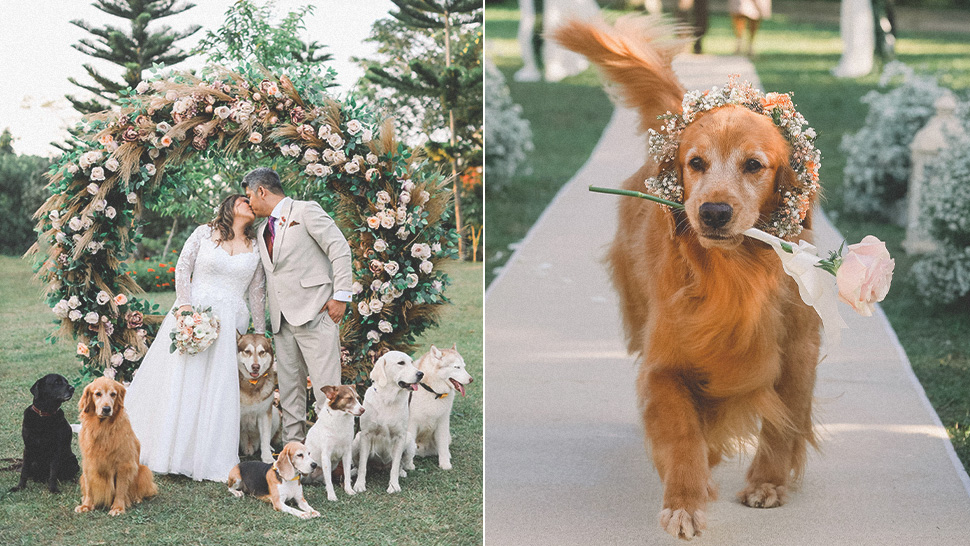 These Dogs Make Up The Cutest Wedding Entourage You'll See Today