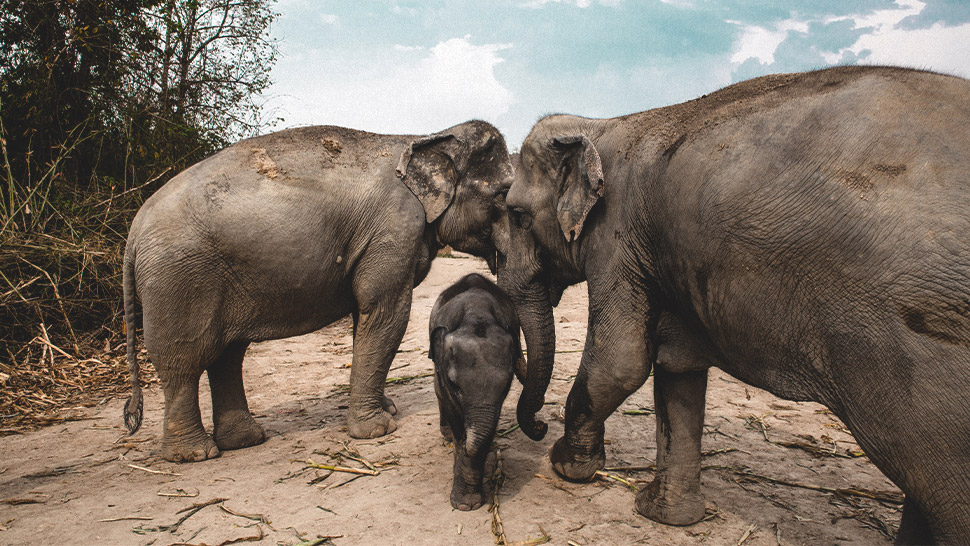 Elephants Are Enjoying Unemployment in Thailand Due to COVID-19
