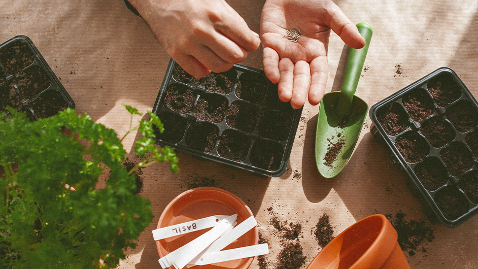 Here's How You Can Regrow Your Vegetables from Kitchen Scraps
