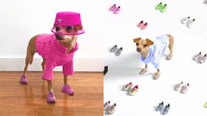 Meet Boobie Billie, Instagram's Most Stylish Dog