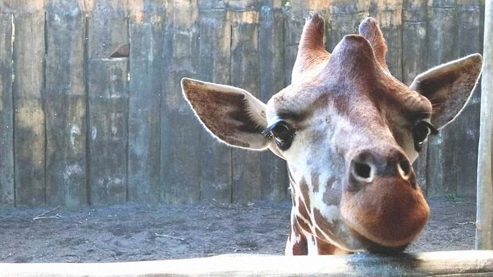 Avilon Zoo Is Asking for Help to Save Their Animals During Quarantine