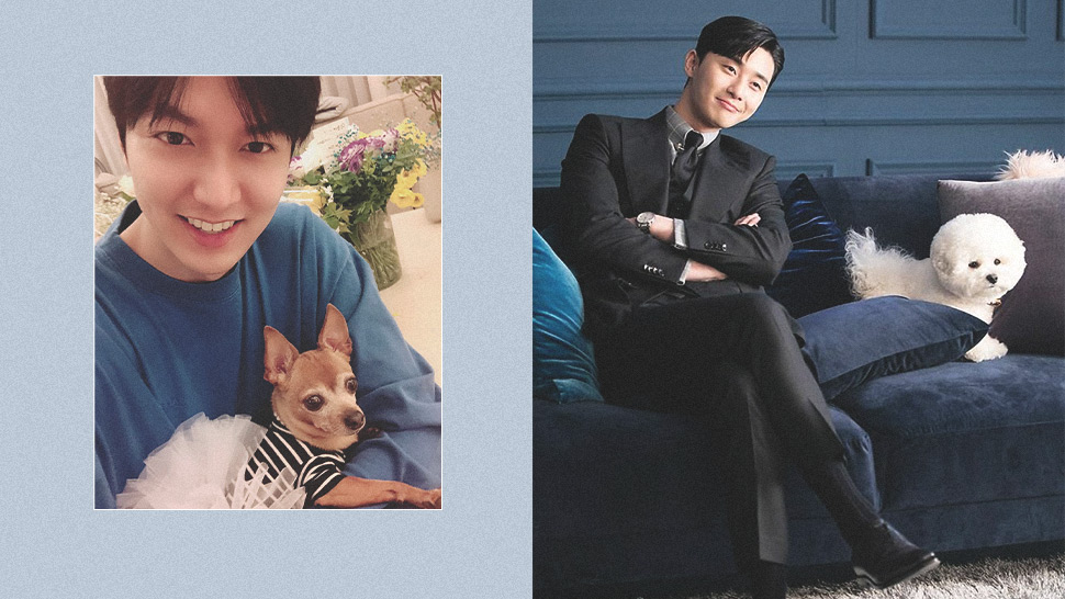 7 K-drama Stars And Their Adorable Pets