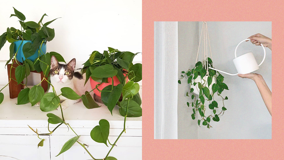 Chic Hanging Plants You Can Shop Online for Your Indoor Garden
