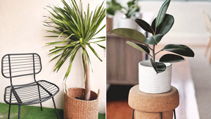 Indoor Trees You Can Buy Online For Empty Corners In Your Home