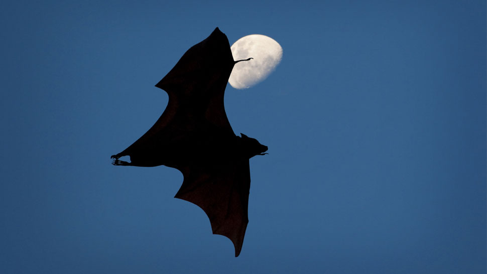 The Internet Is Freaking Out About Giant Bats From The Philippines