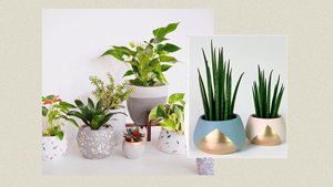 Potted Plants You Can Shop Online To Spruce Up Your Home
