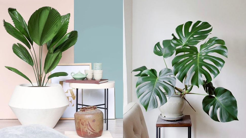 Palm Plants You Can Grow Indoors for a Resort-Like Home
