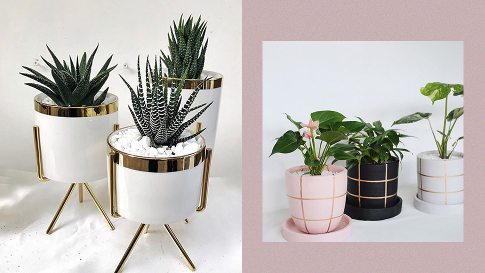 Plant Pots With Gold Accents You Can Shop Online for Your Home Garden
