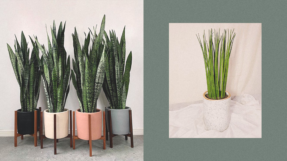 Sleek Indoor Plants That Are Perfect For Condos