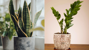 Beginner-friendly Plants That Even New Plantitas Can't Kill