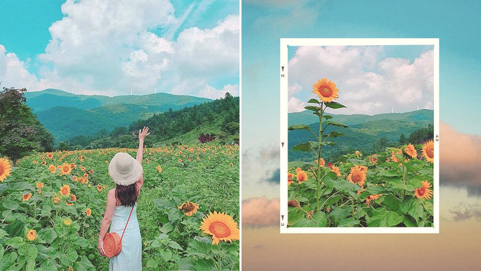This Stunning Sunflower Field in Korea Will Convince You to Take a Trip Outside Seoul
