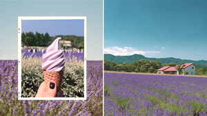 There's A Gorgeous Lavender Farm In Korea And Here's Where You Can Find It