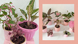 This Online Shop Will Cater To All Your Pink Plant Needs