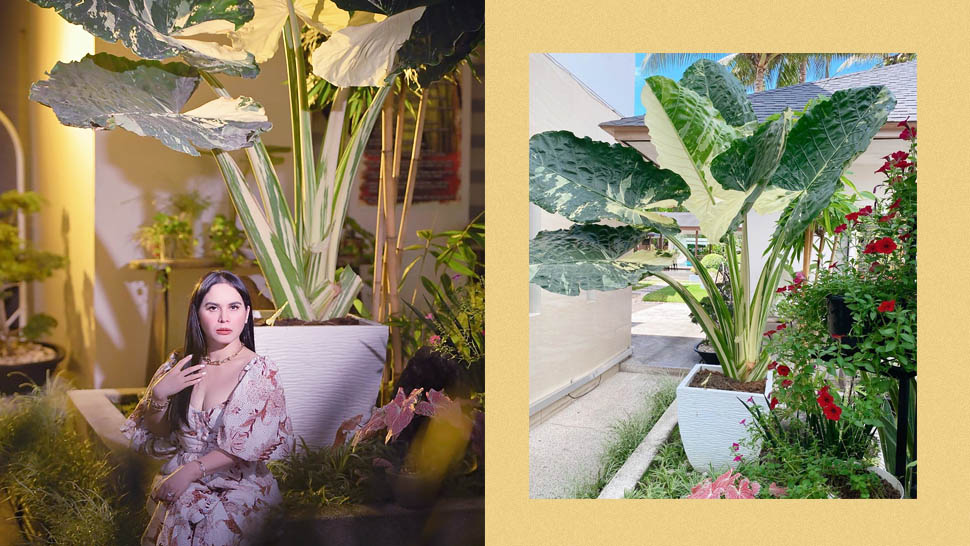 Jinkee Pacquiao Goes Viral for Expensive Plant That Costs Approximately P20,000