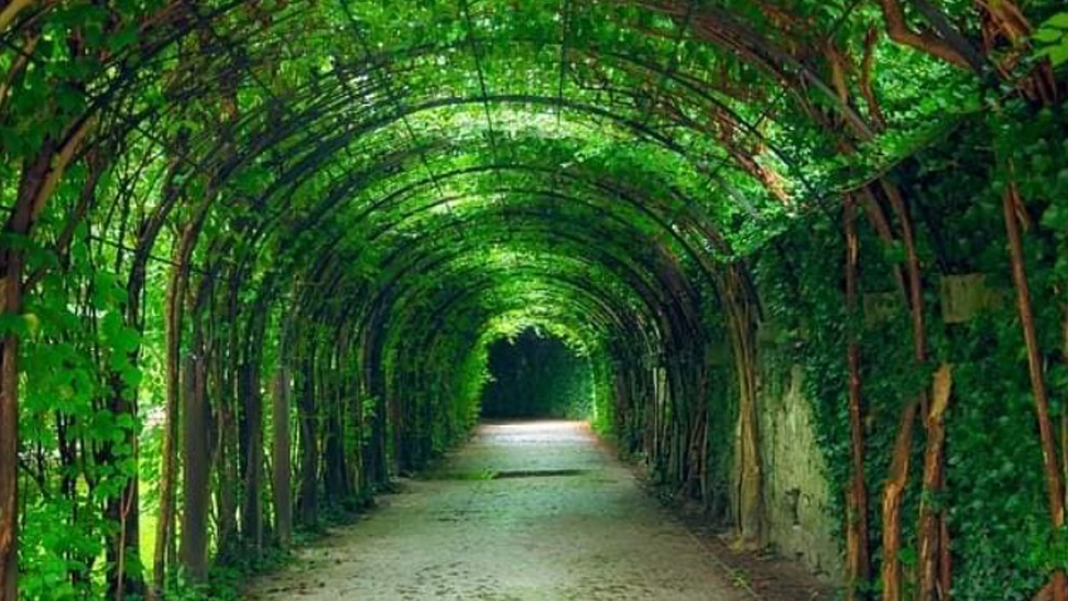 "Iloilo City Is Building ""Green Tunnels"" for Their Bike Lanes and It's Beautiful"