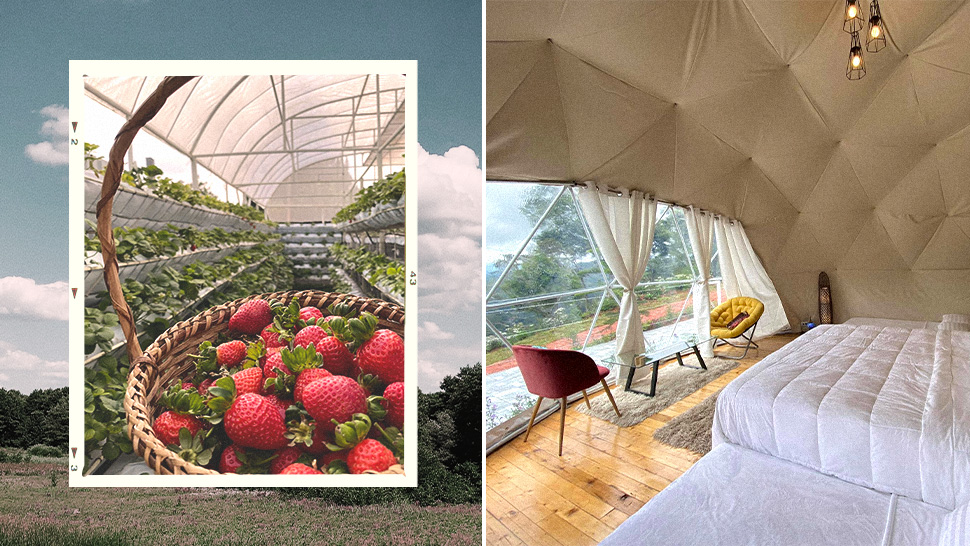 This Unique Glamping Site Lets You Wake Up In A Strawberry Field